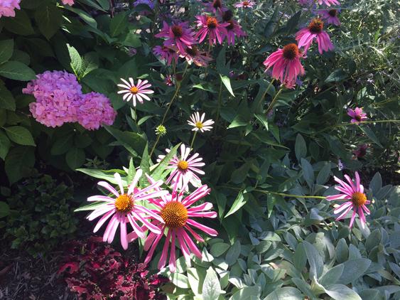 617Festival-of-Flowers-flowers1