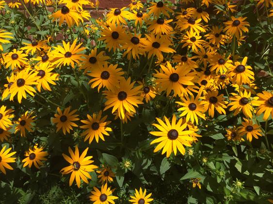 617Festival-of-Flowers-flowers2